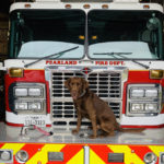 testimonial-Pearland-Fire-3
